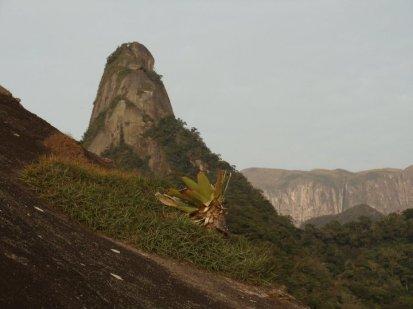 Alcantarea imperialis at Parque Nacional da Serra dos Órgãos, RJ, Brazil