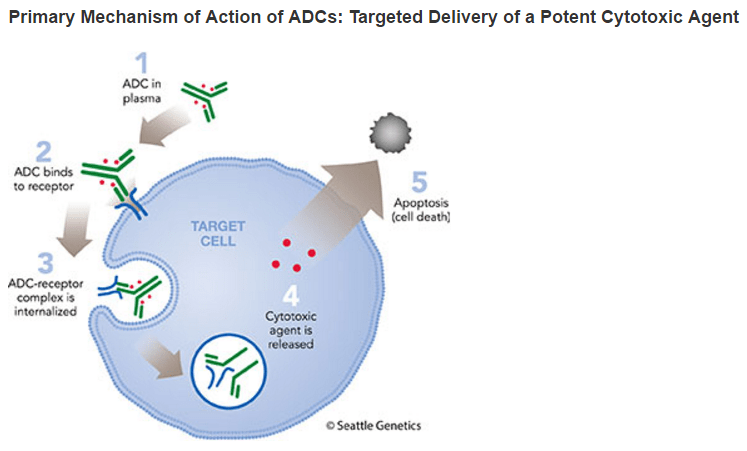ADC mechanism of action