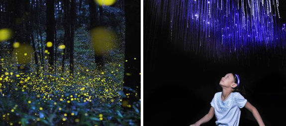 "Firefly signals captured in slow-shutter speed photos. © Tsuneaki Hiramatsu. (Right) A re-creation of New Zealand's Waitomo cave system, with sticky ""fishing lines"" dropped from the ceiling by glowworms. © AMNH\D. Finnin"