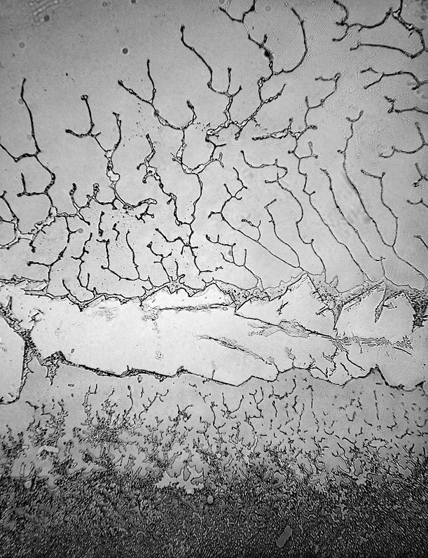 A plane divided horizontally through the middle by a wide, shallow crack with sparse, forking rivulets above and many rivulets below
