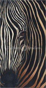 """Zebra II,"" Original oil by Eugenia Talbott"