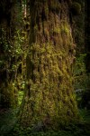 """image titled """"Forest II"""" by Michael Granger"""