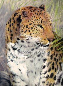 Wildlife artist Lara Strazdas at GoodBean Coffee in July : OIl painting of a leopard by Lara Strazdas