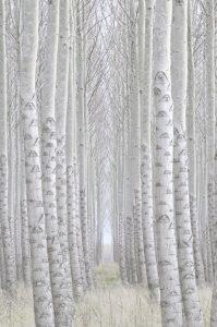 Tom-Glassman-Spring-Fog-199x300.jpg