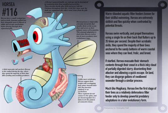 horsea_anatomy__pokedex_entry_by_christopher_stoll-dafuavo