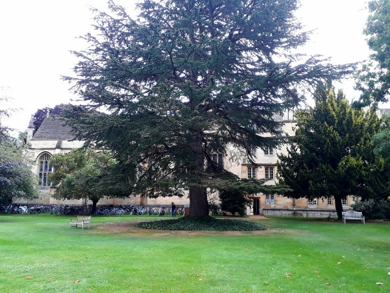 tree in front of Oxford University building