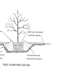 proper tree planting diagram by sam hand [ 1152 x 831 Pixel ]