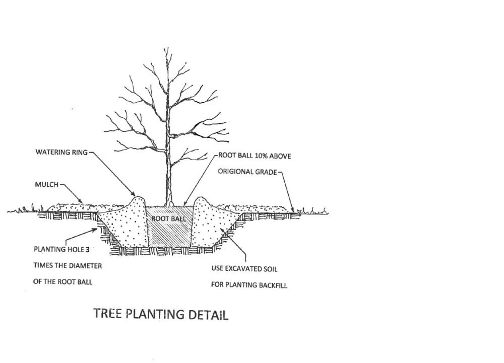 medium resolution of proper tree planting diagram by sam hand
