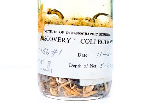 "Trawl sample from the Institute of Oceanographic Science ""Discovery Collections"" LDUCZ-H703"