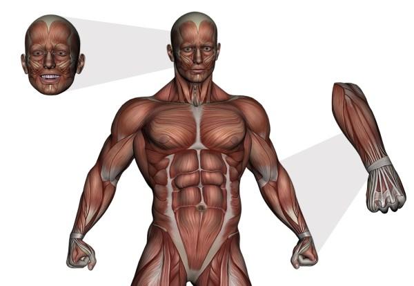 Unidad didáctica 1: Introducción a la anatomía y fisiología ...