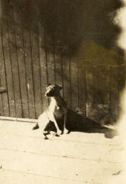 Dog, 1917