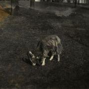 Goat, undated [circa 1913-1942]