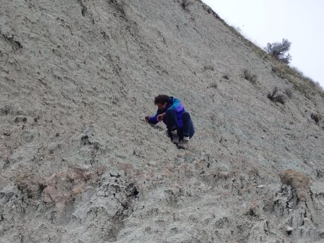 Genevieve scouring the outcrops for aplodontid teeth in Bull Canyon