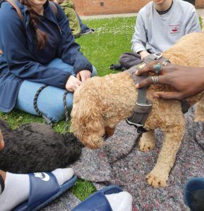 A small light brown dog is standing with a small group of students sat in a circle around. A hand is fussing the dog. A way to get involved with your College during First Year.