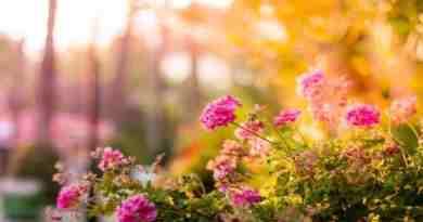 Monsoon Delights for Delightful Garden