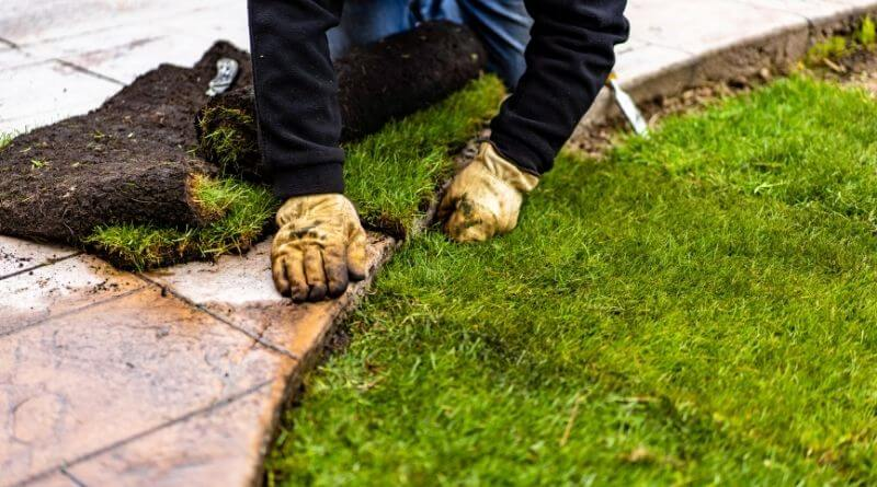 How to Buy Best Turf Online and Maintain the Quality