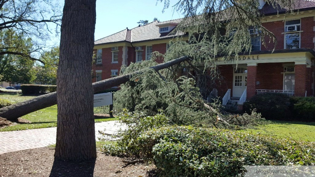 trees down with hurricane matthew