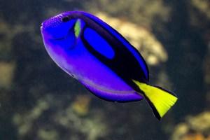 fish-1529192_1920