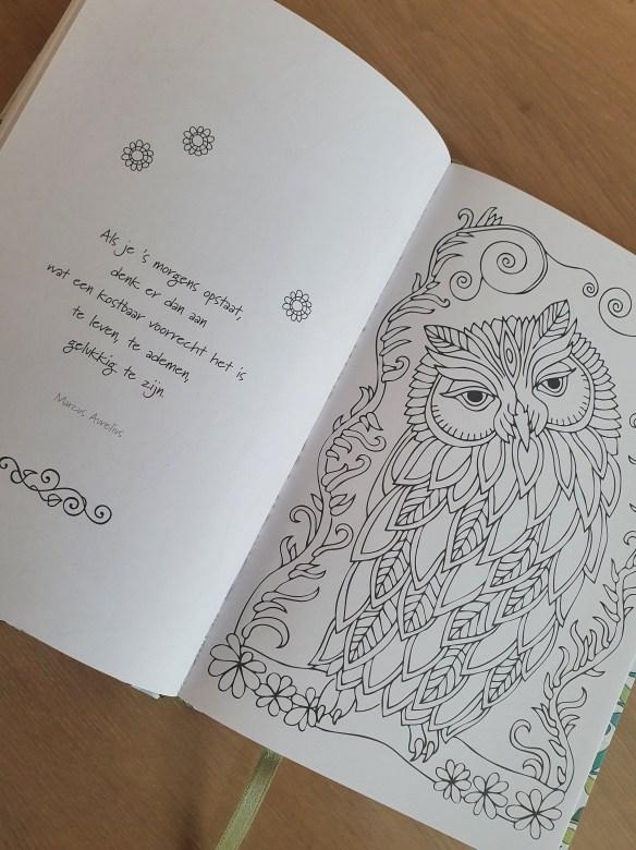 Magical Forest - Kleurboek