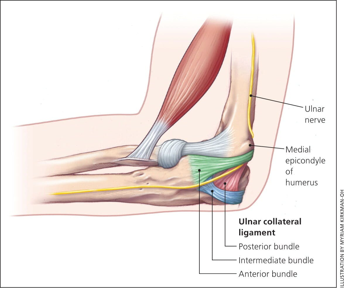 hight resolution of ulnar collateral ligament anatomy