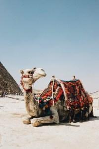 kids friendly travel destination giza