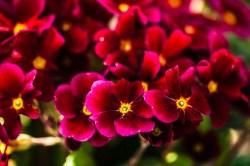 Blüten_Garten 030