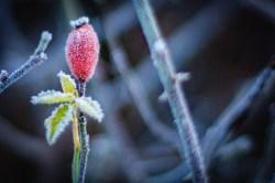 frozen-129