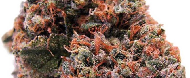 Strawberry Kush Odor and Flavors