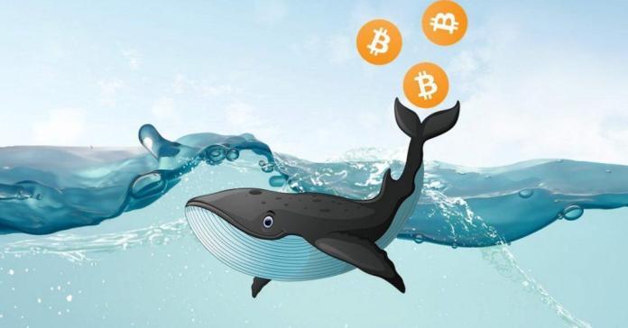 cá voi bitcoin