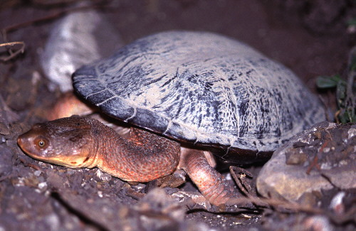 Contoh Hasil Observasi Fauna  Simak Gambar Berikut