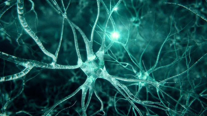 synapses-du-cerveau-humain