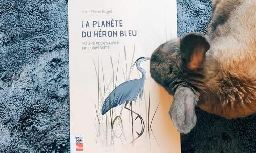 livre Jean-Pierre Rogel