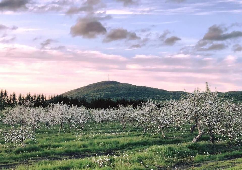4 vergers où vivre la magie des pommiers en fleurs