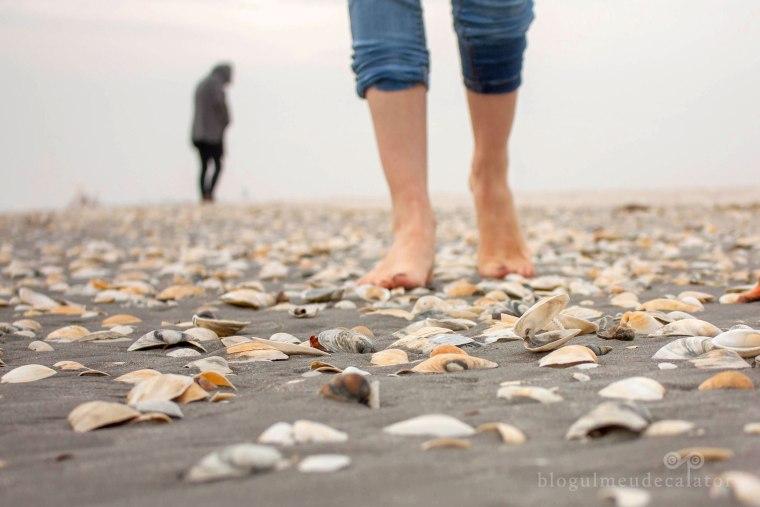 scoici pe plaja corbu