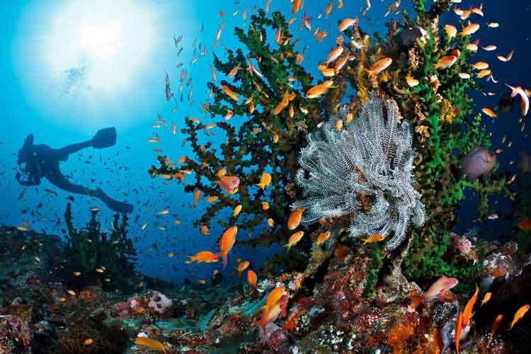 Tempat bulan madu di Indonesia - Pulau Alor
