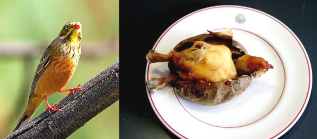 Makanan Ekstrim Di Negara Perancis