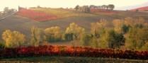 Umbrian vines