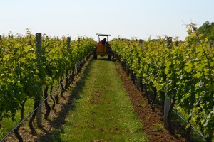 Lieb vineyard, Jildo on tractor