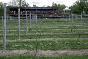 Robibero Vineyards, 1