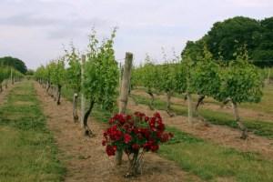 Borghese Vineyard, 06