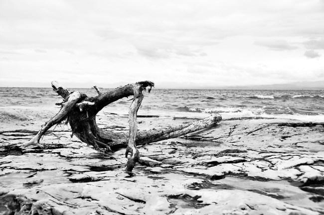 Tree next to sea