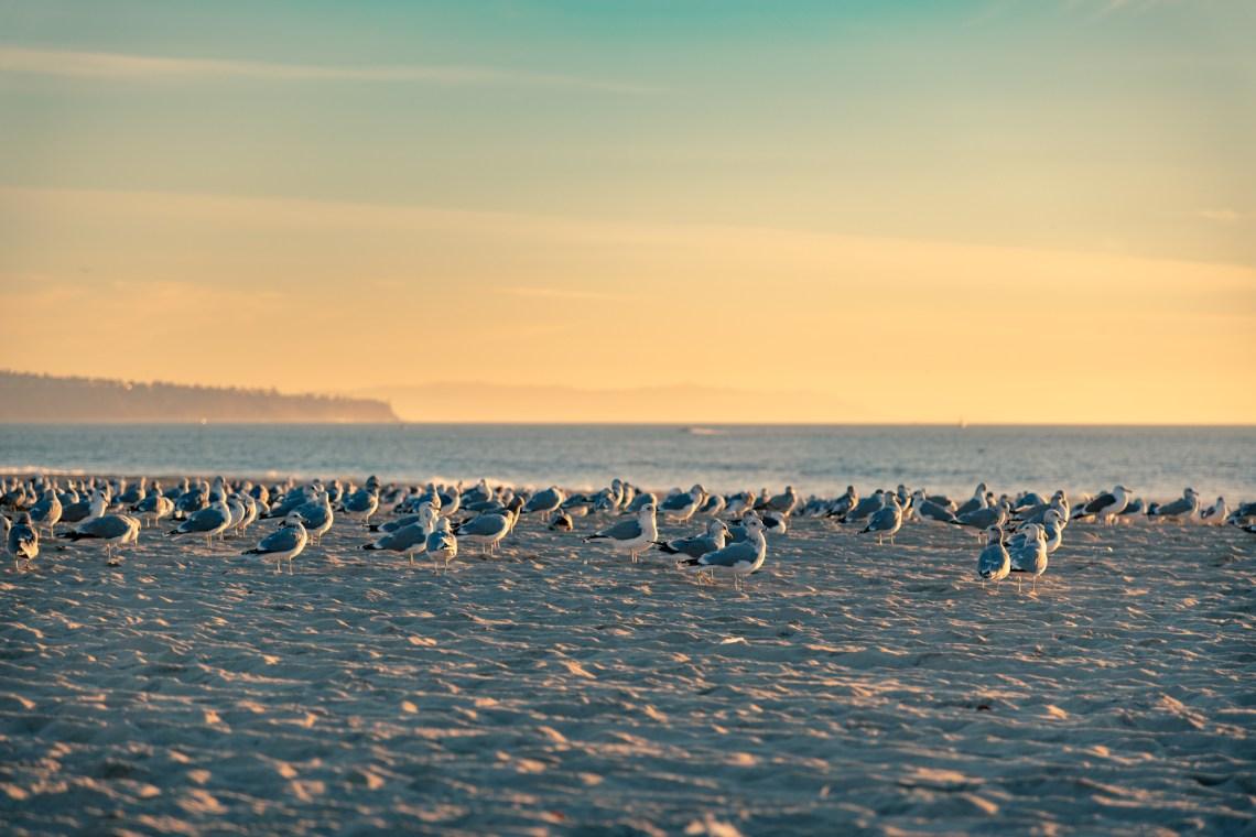 Seagulls resting on sand