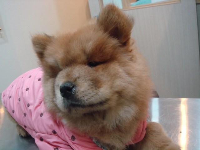 犬瘟熱治療病例分享 - 小獸醫診療經驗分享...^^ - FashionGuide 華人時尚專業評鑑