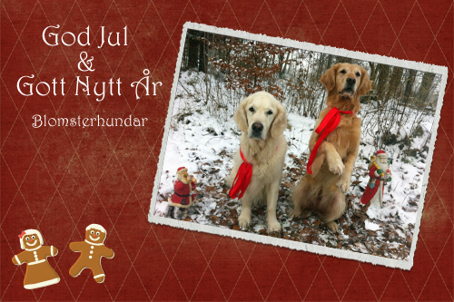 Blomsterhundar önskar god jul