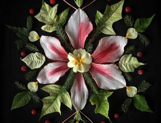 blomsterpill amaryllis