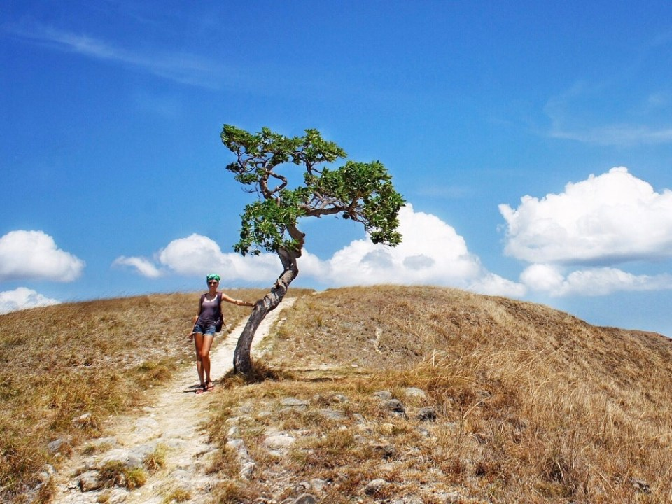 Me, spectacular landscape and lonely tree on the Rinca island