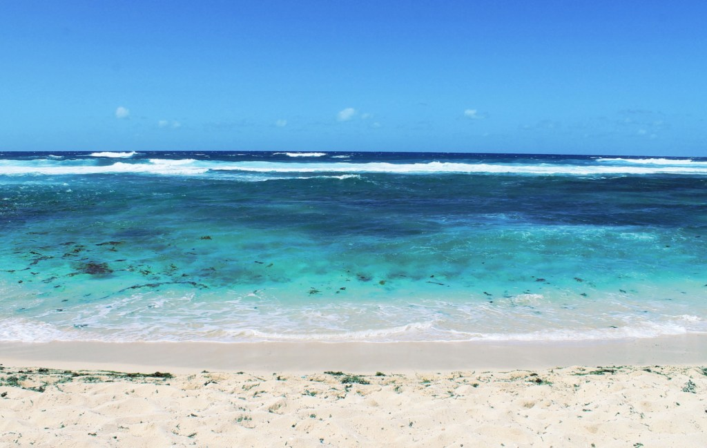 Mauritius: Meetings with dolphins