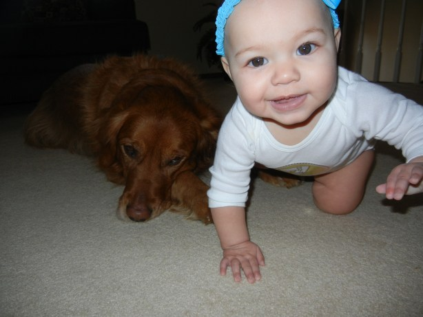 7 month old crawling baby