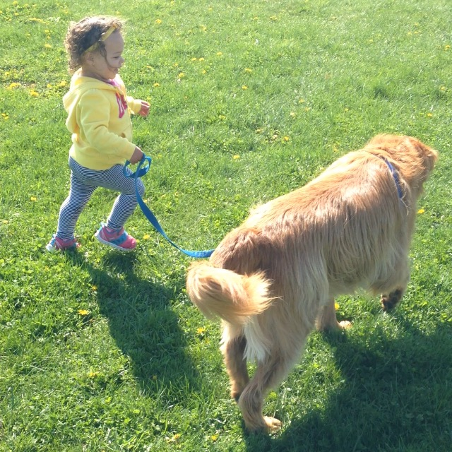 Toddler with Pup running