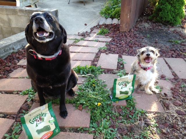 Natural Dog Vitamins Reviews